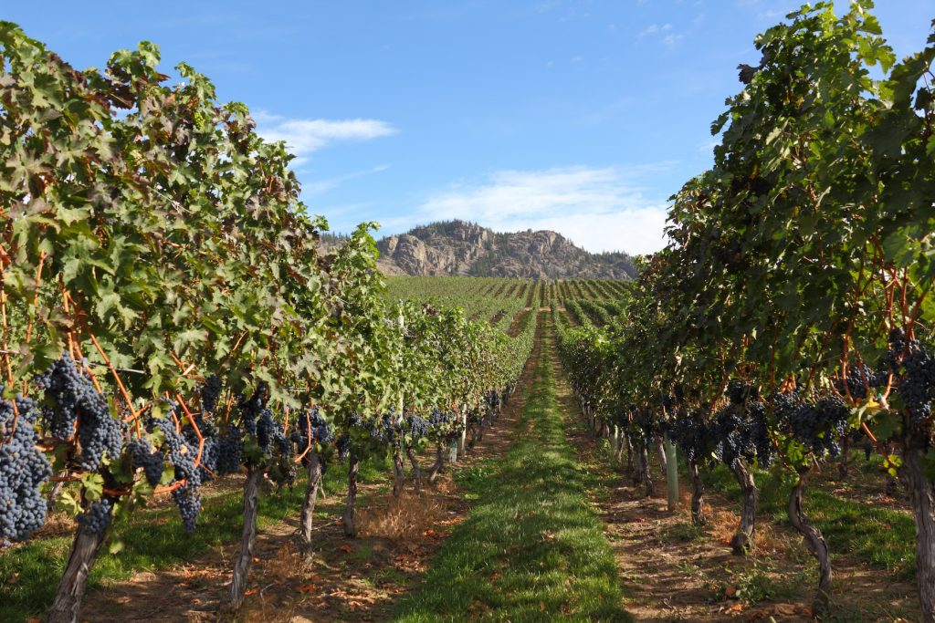 Read more on The Best Okanagan Wines To Complement Your Meal at Brandt's Creek